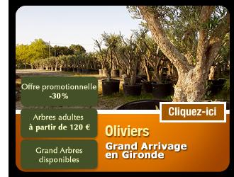 artsetpaysages.com/images/left-oliviers-gironde.png